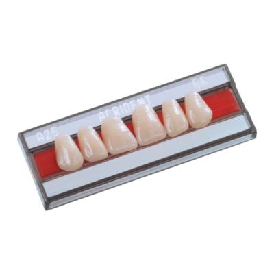 Dente Acrident Anterior/Inferior 3P Cor 66 - Protétic